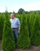 01 Thuja occidentalis Smaragd